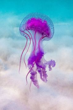We know little knowledge about jellyfish. In this article, types of jellyfish and jellyfish pictures with you. Now let's list the types of jellyfish to you. Beautiful Sea Creatures, Deep Sea Creatures, Animals Beautiful, Types Of Jellyfish, Jellyfish Art, Deep Sea Jellyfish, Under The Water, Under The Sea, Medusa Animal
