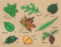 Botânica, tipos de folhas