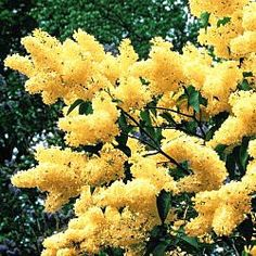 76 Best Yellow Flowering Plants Images Gardening