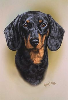Open edition Dachshund print from an original gouache painting by Robert J. May. Dapple Dachshund Puppy, Dachshund Puppies For Sale, Long Haired Dachshund, Daschund, Chihuahua Dogs, Pet Dogs, Vintage Dachshund, Arte Dachshund, Dachshund Love