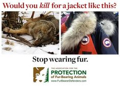 canada goose animal cruelty