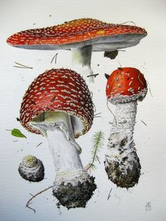 #watercolor #mushrooms Александр Вязьменский