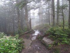 Hikertrash 900: Goshen Prong Trail