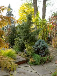 Fall Landscaping Ideas. Select a variety of evergreens to plant around the edges of your yard. They'll give you year-round privacy and provide a beautiful backdrop for other trees, shrubs, and flowers that show off brilliant fall color. Choose cultivars that mature at an appropriate size for your yard.