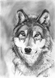 ORIGINAL Wolf pencil portrait drawing 8x12 by HodkiArt on Etsy, £25.00