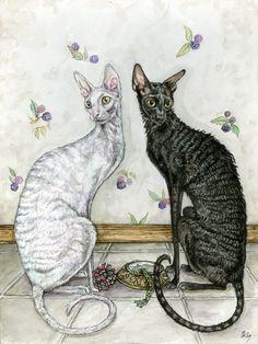 Cornish Rex Cat Commission by Ellie J. Wilson