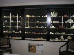 The Durand family seashell collection housed at Atwood House Museum, Chatham, MA. #atwoodhouse, #chathamhistoricalsociety, #chatham, #capecod, #seashell