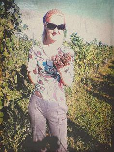 Tramín červený - vinobraní 2012 / wine harvest 2012 - vinohrad Tasovice / vineyard Tasovice