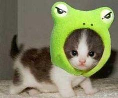 gatito disfrazado