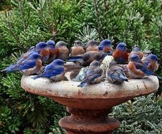 Birding roundtable...We can learn a lot from our fine feathered friends...afterall, they know how to fly and we don't...