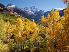 Capitol Creek Aspens Elk Mountains, Colorado Capitol Peak towers above the yellow aspens of Capitol Creek on a gorgeous bluebird September day. Photo © copyright by Jack Brauer.