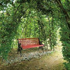 Maladie de Lyme : aménager son jardin pour se protéger des piqûres ...