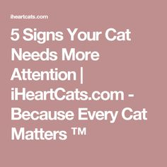 5 Signs Your Cat Needs More Attention | iHeartCats.com - Because Every Cat Matters ™