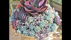 Plant a Birdbath with Succulents