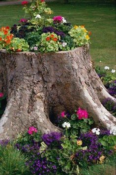 Do you have an ugly tree stump in your yard and you don't know what to do with it??? Why not turn it into a beautiful tree stump by adding flowers all around the base then hollow out part of the the main stump. Use some good potting soil and fill the top of the stump with pretty annuals. Now you have an attractive and gorgeous stump.