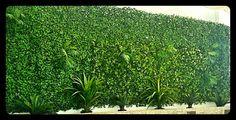 #JardínVertical de #hederas #artificial con sistema #puzzle y #minipalmas colgando. La jardinera la componen #cycas #agaves y #fornios #artificiales #verticalymusgo #Somos #Musgo #Moss #Liquen #Verticales #Decoración #musgomanía #descúbrenos Agaves, Window Boxes, Vertical Gardens, Palms, Terrace