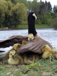 Safe in mothers wings ~