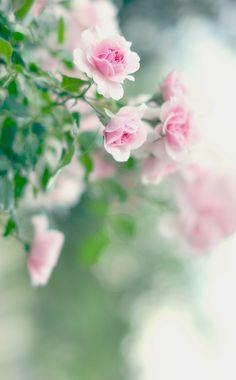 Dulce alegría : Photo