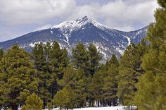 Things to do in Flagstaff- The Town Which Smells Like Vanilla! Lets Perceive Out!