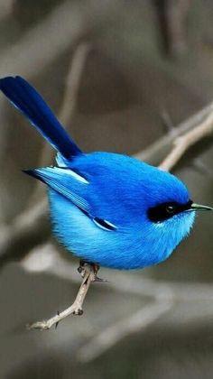 Pretty Birds, Love Birds, Beautiful Birds, Animals Beautiful, Beautiful Pictures, Three Birds, Birds 2, Glass Birds, Exotic Birds
