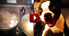 All This Pup Wanted Was Some Peace And Quiet! And HOW He Gets It Will Crack You Up!