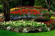 Decoration, The Unimaginable Red Orange Dark Red Yellow Green White Flower Garden Ideas: The Queen Of Flower Garden Design Ideas