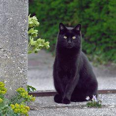 Beautiful black cat it reminds me of my first car Skitz! Short for schizophrenia buhuhuhuhu