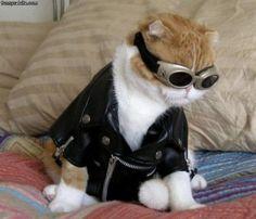 Aviation Cat - Halloween Costume