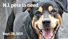 N.J. pets in need: Sept. 28, 2015 | NJ.com