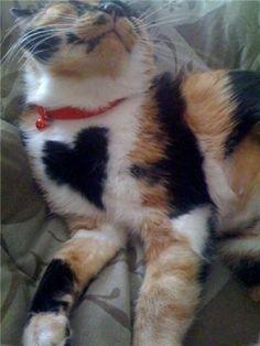 Heart cat!