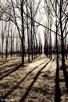 Nikonclub.it - Melancholy wood