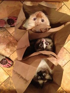 Cats In Bags! I remember my daughters cat used to love jumping into bags. What is with that?