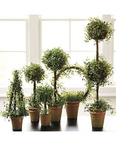 Button Leaf Topiary                                                       …