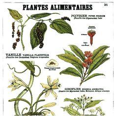 Deyrolle - Plantes Alimentaires