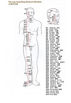 Leg Yang Ming Stomach Meridian