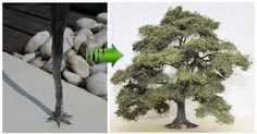 In this guide I will share my way of creating trees that look very realistic using cheap materials :)The basic material used is soft wire for flowers, twined into a trunk, branched off for branches and twigs, covered witha colored texture imitating the bark and a sprinkled canopy of static grass fibers as basis for the foliage