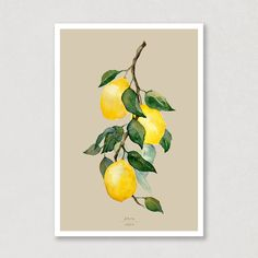 """""""When life gives you lemons..."""" Don't you just love the colours on this one? This watercolour poster with lemons on a branch, will really lighten up your livingroom! This poster come in 6 different backgroundcolours. Check out which one is your favorit! 😍🍋 #lemons #lemonbranch #poster #watercolor #watercolours #art #aqva #aqva_watercolours Watercolor Postcard, Watercolor Artwork, Watercolor Print, Watercolor Paper, Lemon Watercolor, Branch Tattoo, All Poster, Muted Colors, Colorful Backgrounds"""