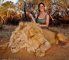 Self-styled 'hardcore huntress' sparks outrage after posting picture of herself with male lion she shot dead on Twitter as thousands sign pe...