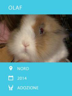 Conigli maschi cercano adozione