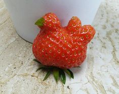 Funny pictures about Chicken-Shaped Strawberry. Oh, and cool pics about Chicken-Shaped Strawberry. Also, Chicken-Shaped Strawberry photos. Weird Fruit, Funny Fruit, Funny Vegetables, Fruits And Vegetables, Weird Shapes, Something Else, Best Fruits, Fruit And Veg, Food Humor