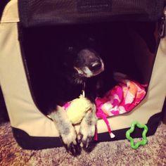 comparison of different kinds of dog kennels