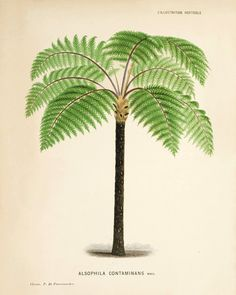 antique-wall-art-etsy-palm-tree-1