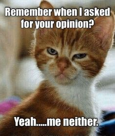 Funny Animal Quotes, Animal Jokes, Cat Quotes, Cute Funny Animals, Funny Cute, Cute Cats, Hilarious, Silly Cats, Funny Animal Pictures