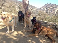 Riggins and his friends find a shady spot at Runyon Canyon -- an off-leash dog hiking area.