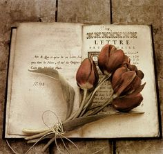Sepia colored picture of tulips tied with tine on a book by Ana Rosa