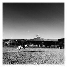 l'animale più bello  #coredo #valdinon #pinetalovers #pinetanaturalmente #bw #bwstreet #vuance #Италия #trentino #iphonegraphy