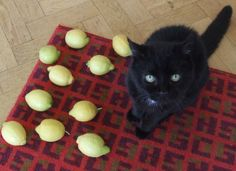Funny pictures about Why My Cat Is Really Sad. Oh, and cool pics about Why My Cat Is Really Sad. Also, Why My Cat Is Really Sad photos. Crazy Cat Lady, Crazy Cats, Funny Animals, Cute Animals, Sad Cat, Sad Kitty, Kitty Cats, Animal Gato, Cat Boarding