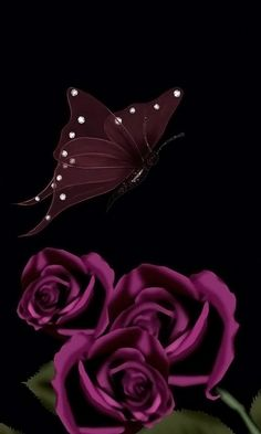 Download 480x800 «Dark Roses and Butterfly» Cell Phone Wallpaper. Category: Art & Graphics