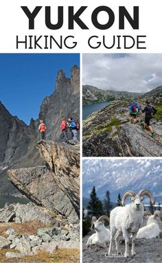 A Guide To Hiking In The Yukon. The Vuntut Gwitchin people live in traditional ways – travelling, camping and hunting – on this land where there is 24-hour-a day sunshine in summer. #camping #canada #travel #yukon #hikes #hiking #northamerica Hiking Guide, Hiking Trails, World Most Beautiful Place, Canadian Travel, Atlantic Canada, Best Hikes, Day Hike, Ski And Snowboard, Cool Places To Visit