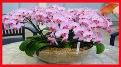 Como Fazer Sua ORQUIDEA dar Flor? 3 Dicas Fantásticas que Essas Flores Precisam Ter | Plantar Orquídeas